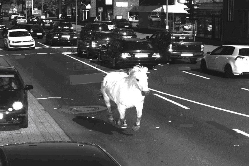 Pferd läuft in Radarfalle Blitzerfoto vom Pferd